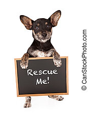 Mixed Breed Small Dog Holding Adoption Sign - Dachshund...