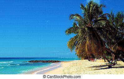 Roatan Sand - The beach in Roatan, Honduras