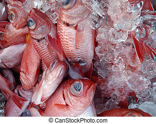 Red Menpachi on Ice for sale at a farmers market in...