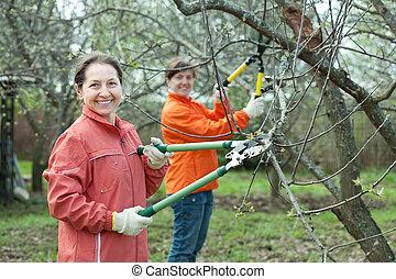 women pruning apple tree - Two women pruning apple tree in...