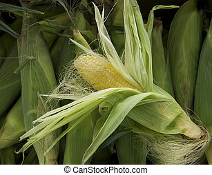 SweetCorn - An ear of sweet corn