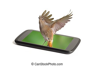 Smart phone screen alive real color