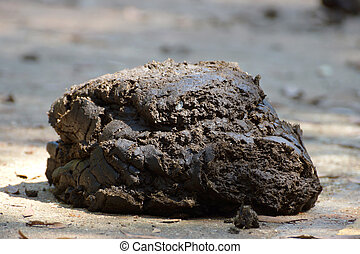 cow manure on a ground.