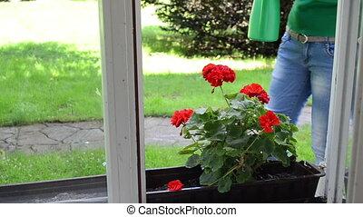 woman water flower can - Housekeeper woman watering flowers...
