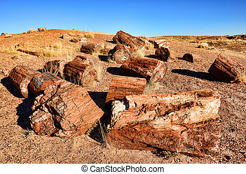 Petrified Trees - Stone trees in Petrified forest Arizona...