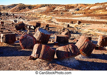 Petrified Trees - Stone trees in the petrified forest...