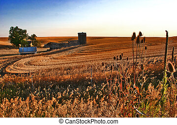 Century Farm on the Palouse - Northern Idaho Palouse wheat...
