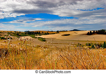 Palouse Plains - Labor day Northern Idaho, the Palouse.