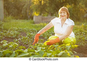 Mature woman working in vegetable garden - Mature woman...
