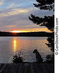 Sunset and Dog - Silhouette of a dog in the sunset in...