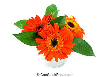 orange gerbera flower on white background