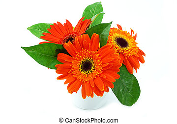 yellow-orange gerbera flower on white background