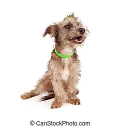 Funny Terrier Dog Laughing