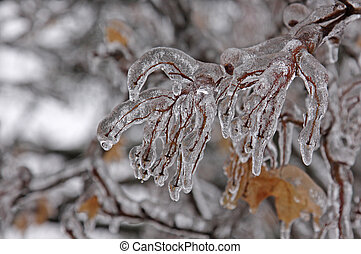 Ice Covered Branch - A tree branch completely covered with...