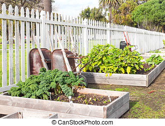 Raised bed vegetable garden - Leafy green vegetables growing...