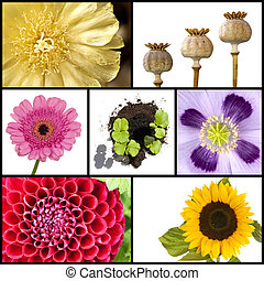 Collage of flowers in squares