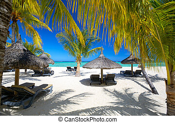 Tropical palm beach - Lounge chairs with umbrellas on white...