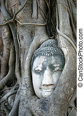 Buddha's head is embedded in tree roots