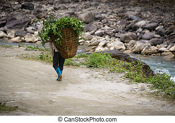 Man carrying plants