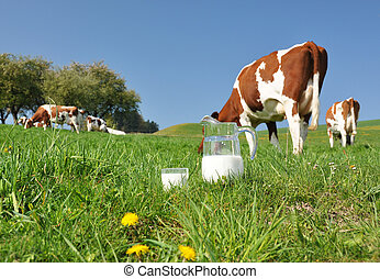 Jug of milk against herd of cows. Emmental region,...