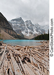 lake moraine - tree trunks in the lake moraine, AB, Canada
