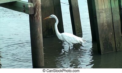 Egret under the dock