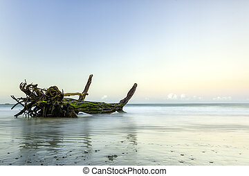 Driftwood photographed in the soft early dawn light