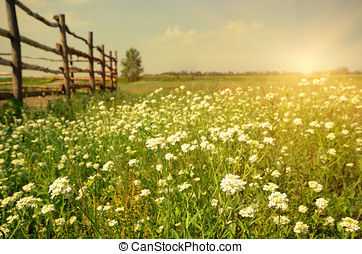 Landscape - Green field evening time with cattle fence