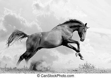 stallion jumps - stallion plays