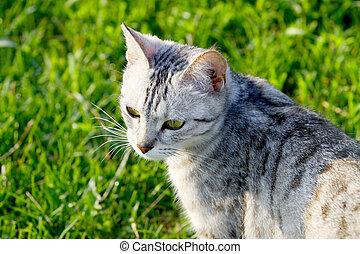 cat on nature
