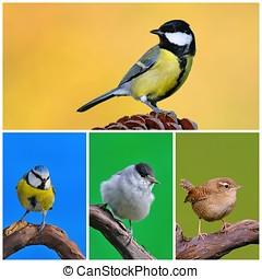 Garden birds. -  Great tit, blue tit, blackcap, in garden.