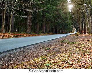 country road into forrest - country road into a forrest at...