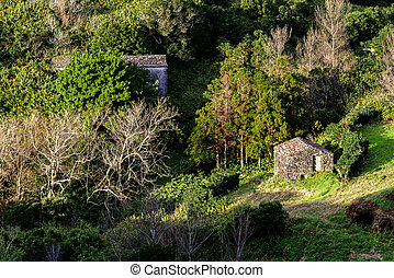 Black lava stone house in wood, autumn, Flores island,...