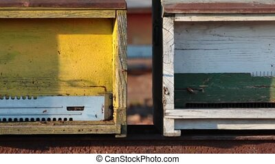 beehives aligned in the countryside