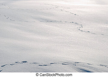 Animal tracks in the snow background.