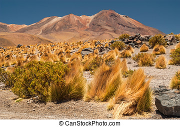 Altiplano Mountains