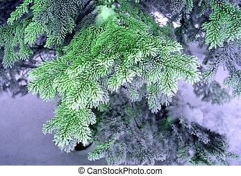 fur-tree ?n a dark blue background