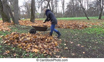 woman wheelbarrow leaves - workwoman loaded wheelbarrow full...