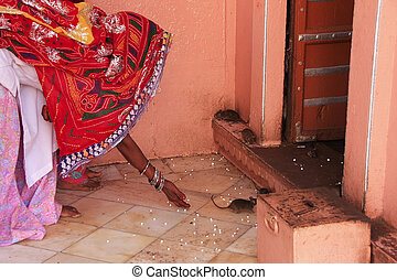 Indian woman offering food for rats, Karni Mata Temple,...
