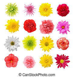 mix flower - nine mix flower isolated on white background