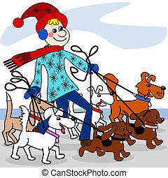 Dog walker - The dog walker is walking multiple dogs in the...