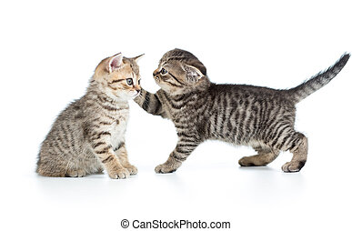 two kittens playing together