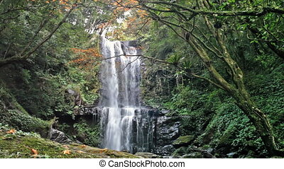 Waterfall with nice maple tree