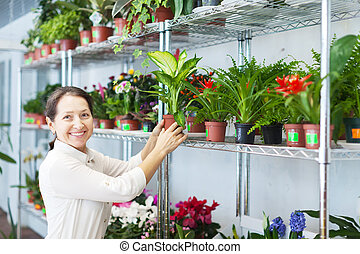 woman with Dieffenbachia - woman with Dieffenbachia plant...