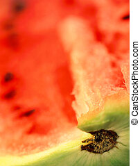 Water-melon