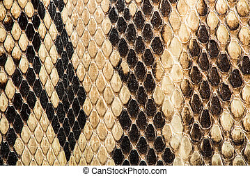 Texture of genuine snakeskin Close up real leather texture