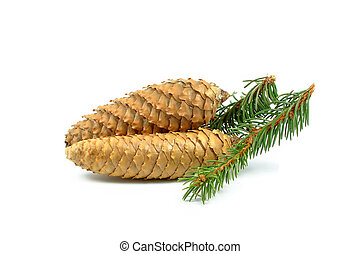 cones - spruce cones on a white background