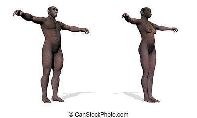 Homo erectus - 3D render - One male and one female homo...