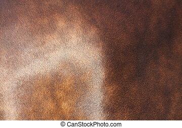 Close up of horse coat - Close up of brown horse coat (fur)