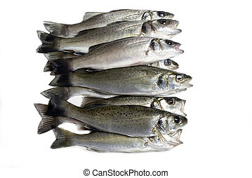 fresh fish, sea bass, ready for cooking, isolated
